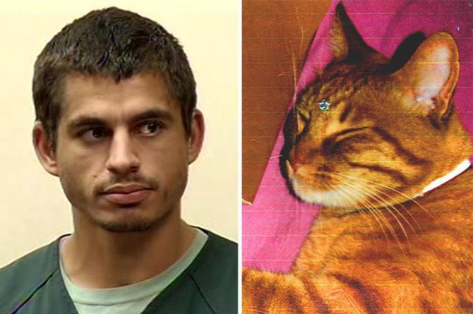 ¡Le dan 16 años de cárcel por asesinar gatitos!