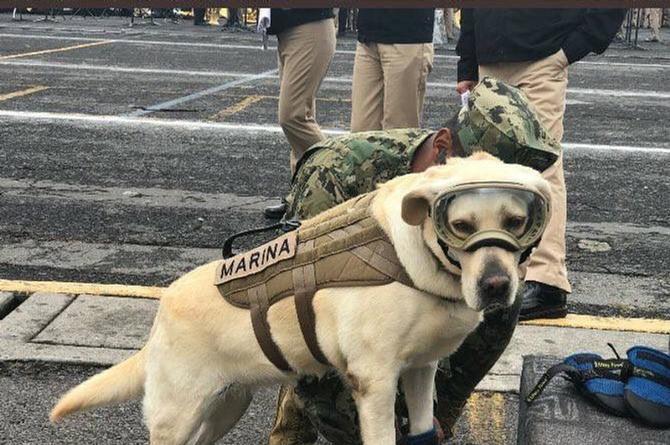 Frida, la perrita que ha salvado vidas en medio de la tragedia en México (+FOTOS)
